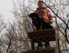 爱犬基地训犬学校长期招收训犬学员训练犬