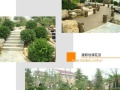 园林绿化工程 景观设计 庭院别墅设计施工 苗木营销
