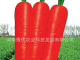 批发零售胡萝卜种子、秋季露地专用、优质、高产、商品率高