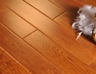 专业地毯清洗、消毒、奶茶咖啡等污渍处理