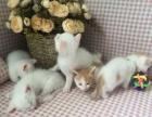 其他 1500元小奶猫找新家