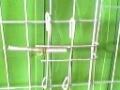 鸽子笼及配件 兔子笼及配件 鸡笼及配件 狐狸笼鹌鹑笼鸡鸽兔笼