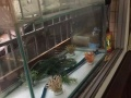 1米长,60高,43宽,95成新鱼缸价格-230