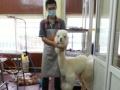李沧区金水路最高档的集宠物美容 用品 寄养为一体的大型旗舰店
