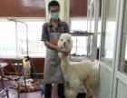 李沧区金水路较高档的集宠物美容 用品 寄养为一体的大型旗舰店