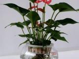 專業花卉租賃公司花卉養護公司