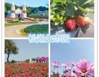 深圳农家乐哪里较适合部门旅游休闲等活动的地方?