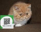 天津在哪里卖健康纯种宠物猫 天津哪里出售加菲猫