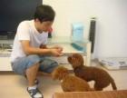 朝阳宠物学校 北京训犬学校