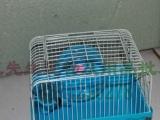 出售仓鼠。金丝熊。仓鼠笼子
