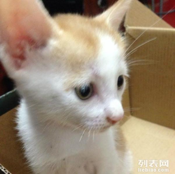 可爱的花白猫咪求领养~   详情描述宠物照片 详情描述 求有爱心的主人