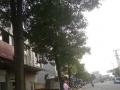 虎山公园斜对面 商业街卖场 300平米