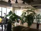 柳梧新区国际总部城412平米中等装修办公室整租