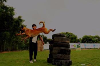 中山伊甸护卫犬训练基地:训练、寄养,节假日不涨价