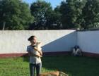 长陵家庭宠物寄养狗狗庄园式家居陪伴托管散养可接