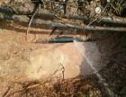 东莞 南城 东城专业管道漏水检测