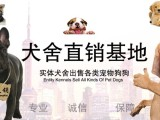 惠州宠物养殖基地直销世界各类名犬 宠物狗 现场挑选 送货到家