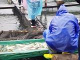 趣养鱼:互联网+农业模式让消费者体验当都市渔人乐趣