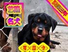 送货上门专业繁殖罗威纳幼犬签售后协议可见父母