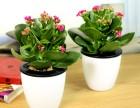湖北武汉出售苗木 花卉 承接园林绿化工程苗木花卉基地