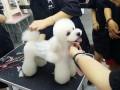 菏泽宠物美容,菏泽宠物美容师学校,菏泽宠物美容培训学校