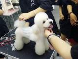 沧州宠物美容,沧州宠物美容师学校,沧州宠物美容培训学校