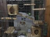 北京房山出达洋52和龙猫柜笼,