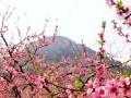 北京平谷桃花海+草莓采摘休闲一日游