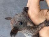 批发零售金花魔王松鼠非洲迷你刺猬垂耳兔等各种小宠物