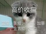 常年收售收宠物猫