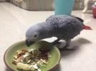 出售灰鸚鵡 玄鳳鸚鵡 凱克鸚鵡 折衷鸚鵡 緋胸鸚鵡