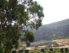 风水墓地,圣水陵园