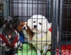 康泰动物门诊春节期间宠物寄养