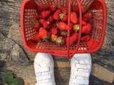上海周边农家乐旅游 挖野菜摘桔子采草莓 喂山羊钓大鱼