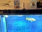 1.5米 50厘米的格池鱼缸转让(整缸鱼)