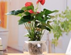 成华区植物花卉租赁销售,私家花园