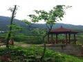 重庆市北碚区龙凤桥1亩苗圃地出租