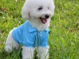 宠物服装狗狗衣服服装卫衣宠物衣服 狗衣服批发 泰迪吉娃娃polo