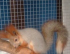 出售兔子 荷兰猪 仓鼠 松鼠 龙猫 鹦鹉鸟等等异宠及用品饲料