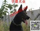 三个月的苏联红犬价格图片纯种苏联红犬多少钱