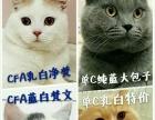 【佳佳家宠物】CFA英短猫矮脚猫公母都有,种公借配