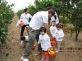 上海浦东农家乐一日游 二日游 采桔子摘草莓 吃土菜钓大鱼
