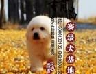 上海大白熊幼犬价格/大白熊多少钱一只