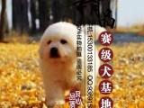 大白熊幼犬多少钱一只 北京哪里有卖的