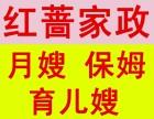 宁波红墙家政--保姆 育婴师 月嫂 催乳师 产后修复