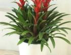 办公室植物租赁绿色植物出租销售花卉租摆开业花篮鲜花