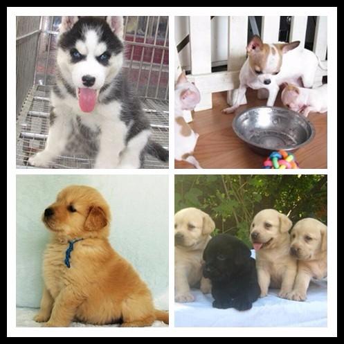 宜昌宠物领养中心 大量狗狗免费送人
