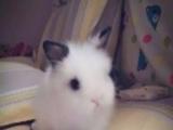 可爱猫猫兔宝宝 甜馨同款 实体店信誉保证 疫苗已打