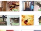 高埗·中堂·万江·石碣·莞城白蚁防治·杀虫灭鼠服务