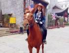 骑马 马匹出租